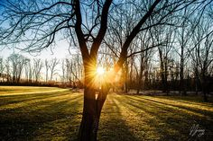 Morning of the Tree of Light Art Print by Joshua Zaring. All prints are professionally printed, packaged, and shipped within 3 - 4 business days. Thing 1, Tree Lighting, Landscape Prints, Nature Prints, Light Art, Love Photography, Color Themes, All Print, Sunrise