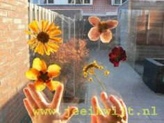 Herfst: gedroogde bladeren/ bloemen lamineren