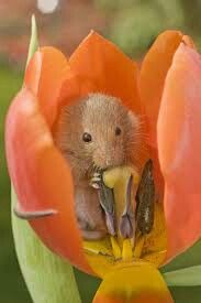 Time to stop and smell the roses. Or a tulip. Or whatever..)