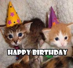 101 Funny Cat Birthday Memes for the Feline Lovers in Your Life Cat Birthday Memes, Funny Happy Birthday Meme, Birthday Cards, Birthday Animals, Birthday Quotes, Birthday Greetings, Birthday Wishes, Funny Animal Memes, Funny Cat Videos