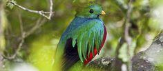Santa Elena Biological Reserve | Costa Rica Activities