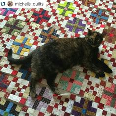 Michelle's kitty is impeding her Garden Party quilt assembly! Gorgeous progress…