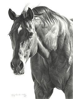 27 fantastiche immagini su cavalli drawings of horses horse paintings e white horses for Disegni di cavalli a matita