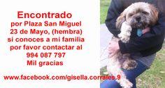 Encontrado por Plaza San Miguel 23 de Mayo, (hembra) si conoces a mi familia por favor contactar al 994 087 797 Mil gracias  www.facebook.com/gisella.corrales.9 https://www.facebook.com/photo.php?fbid=10154047849598492&set=a.10151097877073492.449508.774668491&type=1&theater