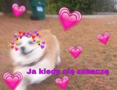 Polish Memes, Cute Texts, Sweet Pic, Wholesome Memes, Love Memes, Man Humor, Loving U, Reaction Pictures, Funny Cute