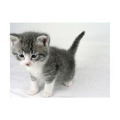 i track 'cattywatty' and 'aleil' via Polyvore