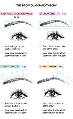 Eyebrow Quad Ratio Theory
