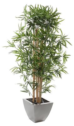 Closer2Nature Artificial 4ft Golden Bamboo Tree - Portofino Planter Not Included * Quickly view this special  product, click the image (This is an amazon affiliate link. I may earn commission from it)