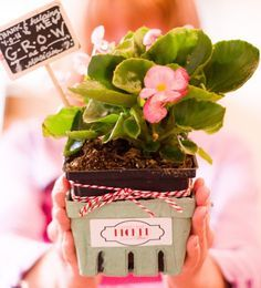 I couldn't have Picked a better Teacher Appreciation Gift. Plant in berry basket with mini chalk art pick. Employee Appreciation Gifts, Teacher Appreciation Week, Best Teacher, Teacher Gifts, Teacher Stuff, Volunteer Gifts, Berry Baskets, Client Gifts, Gag Gifts