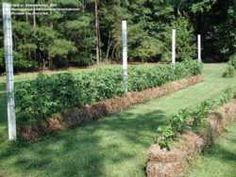 Article and steps to STRAW BALE GARDENING