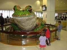 Green & Golden Bell Frog, Sydney Airport | To date I still h… | Flickr