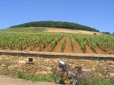 Beaune France--wineries