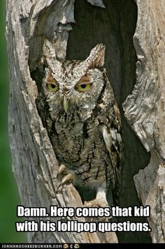 Mister Owl, How many licks does it take to get to the tootsie roll center of a tootsie pop?  Ah one,  Ah two-ho, Ah three... Ah-three. (remember now?)