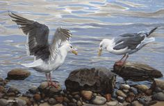 """Called this """"Lovely Scavengers"""" as they prepare to compete for the leftovers of our fish stew."""