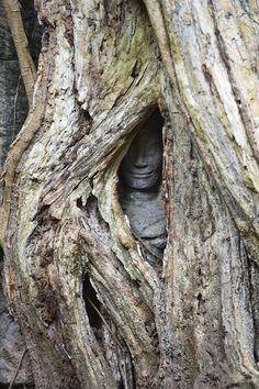 This tree is slowly engulfing a stone statue. Та Пром (by Catherine Zasukhina) Angkor Wat, Cambodia