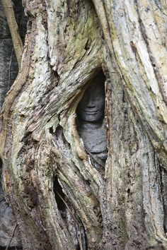 This tree is slowly engulfing a stone statue. Angkor Wat, Cambodia.