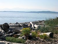 """Lincoln Park in West Seattle is a large park with """"grassy forests and meadows"""" and a wonderful rocky beach where you can watch ships and ferries going by. Picnic tables are available and shelters can be reserved. A great place to watch summer sunsets."""