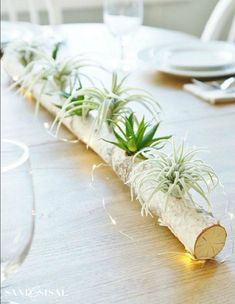 Amazing Air Plant Display Ideas to Add Uniqueness to Your Home. Are you planning to create a unique living decor to decorate rooms in your house? Garden Terrarium, Terrariums, Succulents Garden, Planting Flowers, Hanging Terrarium, Air Plant Display, Plant Decor, Outdoor Plants, Air Plants
