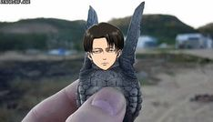 OMG Levi what happened with you XD