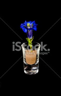 #Close-Up Of #Gentian In #Glass On #Black #Background @iStock #iStock #spring #flowers #flowerpower #season #nature #colorful #blue #green #stock #photo #portfolio #download #hires #royaltyfree
