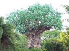 Tree of Life- Disney World