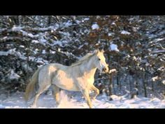 WILDFIRE - michael martin murphy - with LYRICS