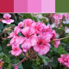 《Pink Gradient Palette》