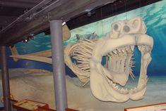 Megalodon model, Calvert Marine Museum