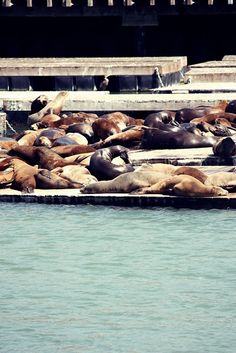 Pier 39 San Fransisco This was ssooo much fun to watch, it's like sea world but free!! I know I had sea world passes for 5yrs. Beeskneesvintagegarden