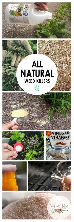 All Natural Weed Killers, great for your organic backyard garden Kill Weeds Naturally, Organic Gardening Tips, Urban Gardening, Vegetable Gardening, Natural Garden, Backyard Landscaping, Backyard Ideas, Modern Backyard, Landscaping Design