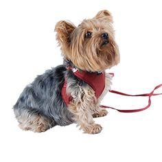 Adjustable Vest Pet Harness with Leash for small dogs only XXSmall Burgundy -- See this great product.