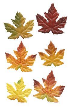 glenda's World : Fall Designs and Decorating
