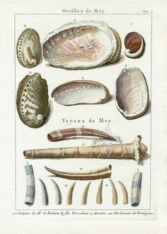 Shell Prints from La Conchyliologie by Dezallier d'Argenville, 1780