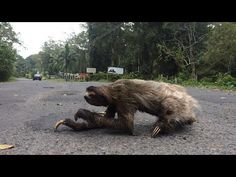 當心樹懶 安心上路 - 國家地理雜誌中文網
