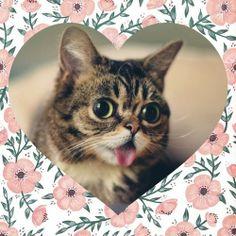 Lil Bub ♥