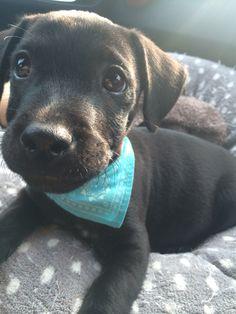 My gorgeous boy! Patterdale terrier