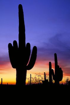 OK. I'm sure this post was not intended to be funny, but, am I the only one who thinks this cactus is giving us the finger? Cactus sunset - Saguaro National Park, Arizona