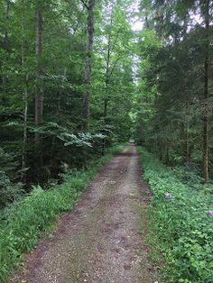 Blog über das Reisen und wandern. Zurzeit vorallem Wandern in der Schweiz. Fernziel ist der Fernwanderweg E1 Bern, Switzerland, Summertime, Trail, Country Roads, Outdoor, Adventure, Hiking, Forests