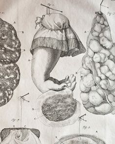 frederik ruysch anatomy - Google-Suche