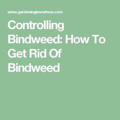 Controlling Bindweed: How To Get Rid Of Bindweed