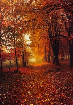 The beauty of Autumn - by Slava Samoilenko....I could get lost here for hours daydreaming......