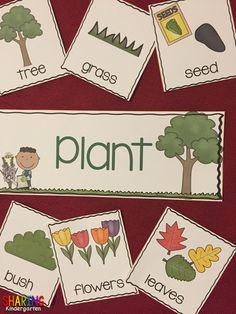 Pocket chart plants sorting