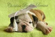 The graduate pup
