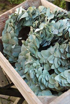 Eucalyptus kransen