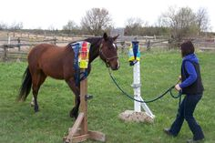 Confidence Building Ground Work 1 Day Clinic - Oct 18th, Hagersville, Ontario.  Confidence building for horses and their humans.