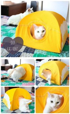 DIY 5 minute cat tent. This cat tent is super easy to make - you really just need a t-shirt, some wire hangers and a piece of cardboard. As a bonus, it really only takes five minutes, so if your cat ignores it you didn't put too much effort in. ;) #diy #crafts #cats