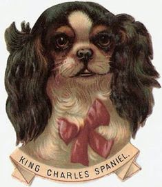 King Charles Spaniel that looks alot like our Vinnie Cavalier King Charles, King Charles Spaniel, Vintage Dog, Vintage Images, Vintage Paper, Art Textile, Decoupage, Animals Images, Dog Portraits