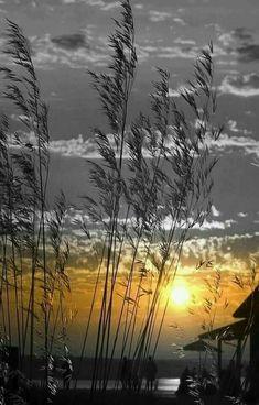 splash of color Splash Photography, Color Photography, Landscape Photography, Grey Pictures, Black And White Pictures, Beautiful Pictures, Color Splash Photo, Photoshop Photography, Beautiful Sunset