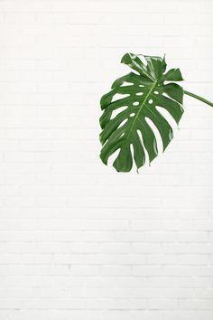 white ● minimalism ● inspiration ● pinned by @birambi_: