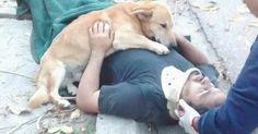 Ce chien refuse de quitter son maître inconscient après une mauvaise chute
